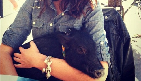 """Mini pig in lap"""